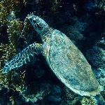 Aquarium der Insel Elba