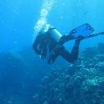 diving Insel Elba