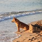 Strände Hunde Insel Elba