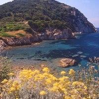 Strandes Enfola