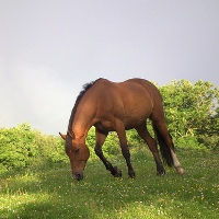 Equitazione isola d'Elba