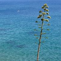 Windsurf isola d'Elba