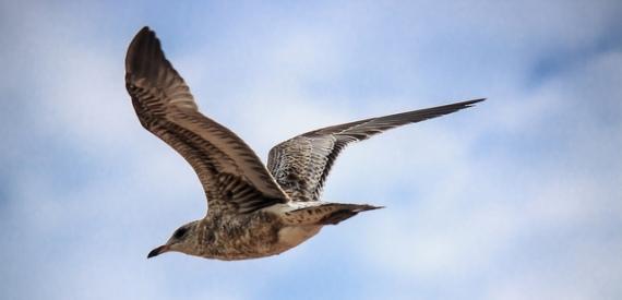 Birdwatching isola d'Elba 2015