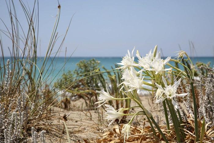 le dune di Lacona
