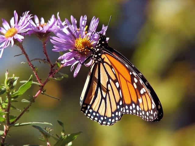 sentiero delle farfalle elba