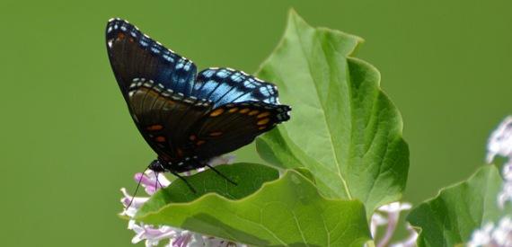 I voli delle farfalle 2015