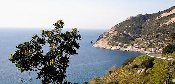 isola d'Elba estate 2016