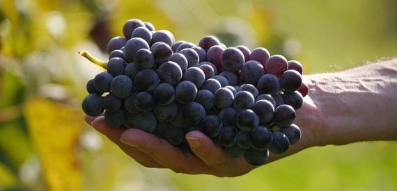 Festa dell'uva Capoliveri 2016